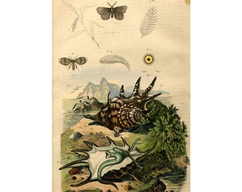1835 EXOTIC LANDSCAPE SHELLS print original antique nature insects engraving
