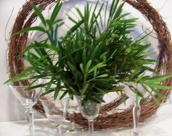 Japanese Yew Fresh Cut Greenery for Wedding Decor Arrangements Box Full