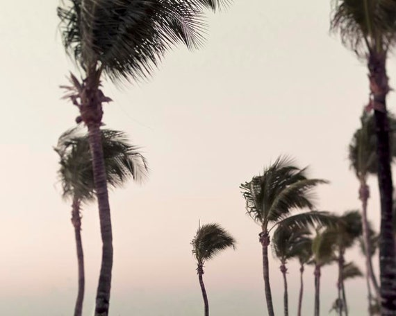 Palm Trees Print, Ocean Photography, Shabby Chic, Nature Photography, California Print