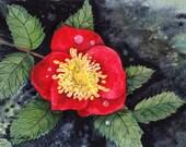 Iowa Wild Prairie Rose, Watercolor Original, State Flower, Purple
