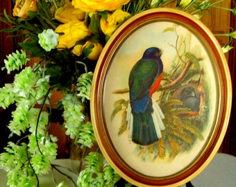 Vintage water color bird mixed media signed GW in oval MCM frame 1950s
