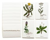 Medicinal Plants Greeting Cards - Set of 8