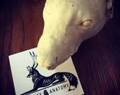 Afterlife Anatomy Logo Sticker - Taxidermy, Oddities, Curio