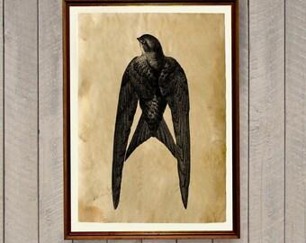 Bird poster Cabin decor Swallow print AK452