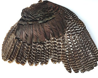 "Large Turkey Wing With Feathers - Wall Mount Taxidermy, 12""-15"" Turkey Wing Feathers, Craft Supplies For Jewelry Accessories, Bird Feathers"