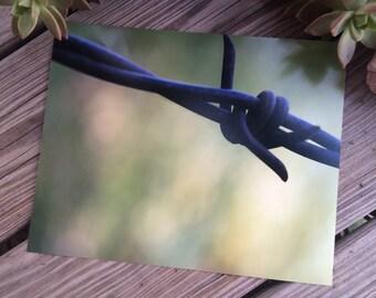 Barbwire - 8x10 Lustre/Matte Professional Photography Print