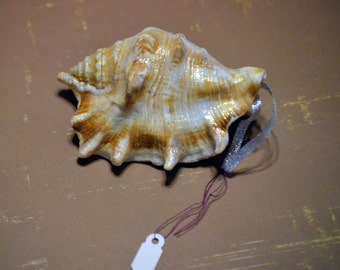 Shell Ornament