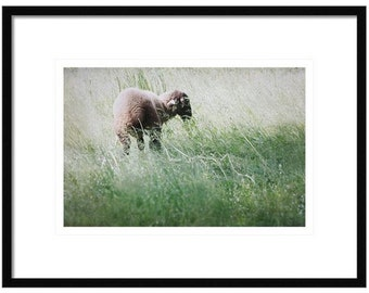Lamb Decor, Lamb Photography, Farm Country Decor, Fine Art Photography, Farming Life, Grazing Lamb, Lamb in Field, Soft Focus