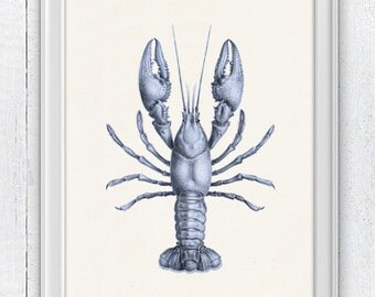 Blue Lobster sea life print- Wall decor poster   Sale buy 4 get 5- Marine  sea life illustration A4 print SPA02