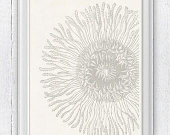 Jellyfish detail  in grey - House decor poster art- coastal decoration  print- Wall hanging  illustration A4 print SPOJ018