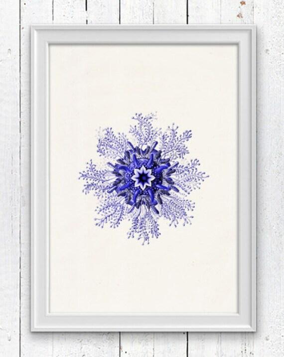 Minimalist Jellyfish from the bottom   , Wall decor poster - sea life print-Marine  sea life illustration A4 print SPOJ020