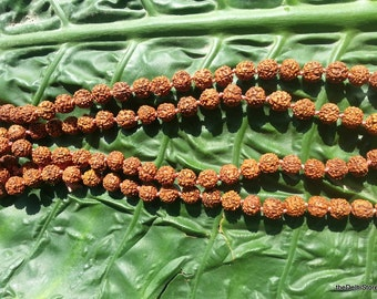 Rudraksha Beads Shiva Tears Yoga Jewellery Making Supplies