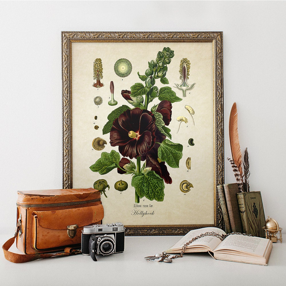 Old Vintage Wall Decor : Antique botanical wall art print hollyhock giclee vintage home
