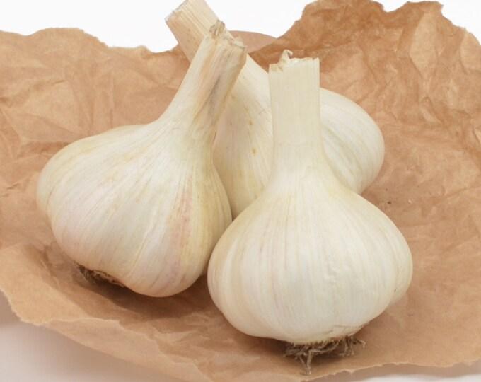 Metechi Garlic Bulbs Grown Organic Gourmet - 3 Blubs For Fall Planting or Cooking Fall Shipping