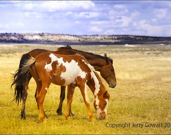 Two Wild Mustang New Mexico Horses Stallion Mare Grazing On The Open Range Aquitanian Fine Art Photography Print