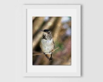 Hummingbird Photography | Bokeh Photography | Gifts Under 30