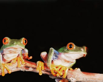 Tree Frogs on Branch (Art Prints available in multiple sizes)