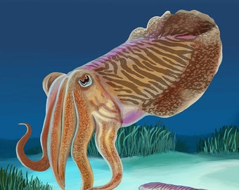 Cuttlefish (Art Prints available in multiple sizes)