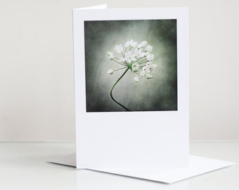 Photo greeting card. Floral greeting card. Flower greeting card. Allium Photographic Greeting Card. Blank card