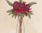 Waratah Bouquet A4 Print, Waratah Flower Artwork, Waratah Watercolour Painting, Art Print, Wall Art, Wall Decor, Flower Print