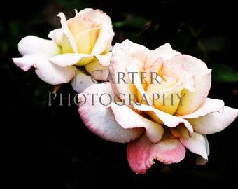 Dark Garden Series - White Roses