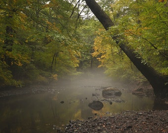 Fall Mist: stream, river, forest print, fog, water, yellow, green, autumn, mystical woodland wall art