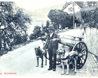 Vintage Dog Postcard: Milk Wagon Dogs/ Working Dogs