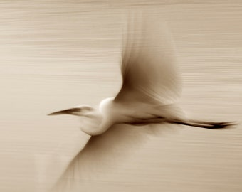 Great White Egret flight, Bird photography, Sepia color Wall decor