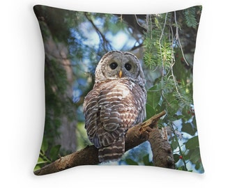 Owl Pillow, Owl Cushion, Barred Owl, Owl Decor, Hoot Owl, Owl Throw Pillow, Wildlife Cushion, Bird Decor, Raptor Decor, Nature Decor