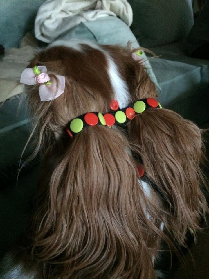 Multi Versatile Ear Harness For Long Ear Dogs Or Long Hair