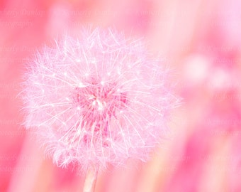 Dreamy Dandelion Print {Pink Peach Coral Large Flower Artwork Wall Art Canvas Picture Photo Photograph Baby Baby's Girl's Nursery Decor}