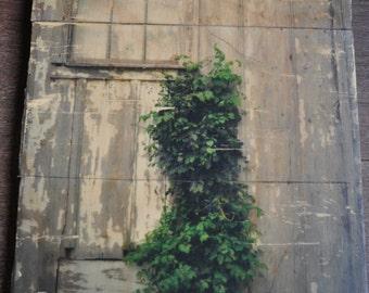10x16 climbing ivy wood print / rustic decor / paneled wood print / fine art photography / 10x16