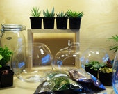 Glass Fish Bowl Terrarium Kit (Build Your Own Design) DIY