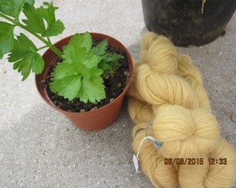 Icelandic pure wool, hand dyed with the root of Rheum rhabarbarum  0413-4
