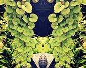Plants - Ellicottville NY, planter, green, purple, leaves, face, garden, metallic photo