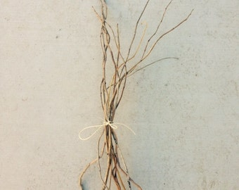"Natural Willow Branches for floral design or craft projects 36"" to 48"""