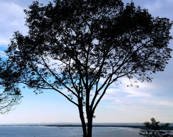 Trees, Landscape Photography, NYC, Hudson River, NJ