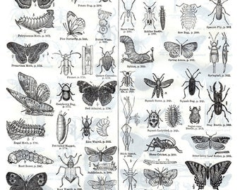 Insects Print Wall Art Collectibles Illustration 1914 Bugs Beetles Moths Creepy Crawly Wings Ready to Frame