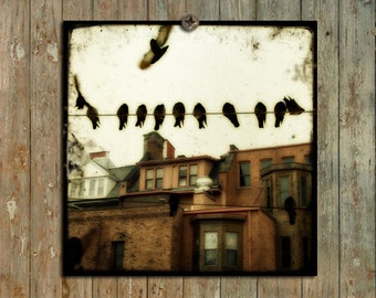 Urban Wildlife Photo, Avian Art, Cityscape Print, Houses, Row Of Houses, Telephone Wires - Birds In The Old Neighborhood