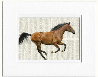 horse, arabian horse photo