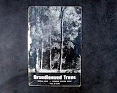 Vintage 1947 Booklet, Broadleaved Trees, Yosemite National Park Nature Notes, Ansel Adams, Paper Ephemera, Natural History Field Guide