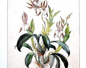 Exotic Flower Print - Zygosepalum labiosum - Orchid Flower - Margaret Mee 1988 Vintage Book Page 11 x 8.5
