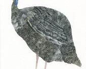 Single Guinea Fowl -Archival Print