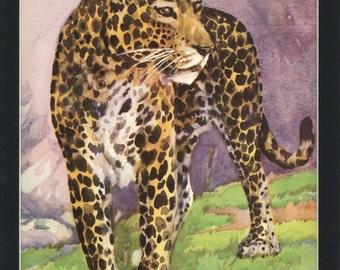 Beautiful 1933 Vintage Africian Leopard Wild Animal Print