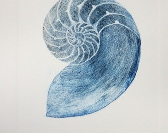 Chambered nautilus shell cross section original drypoint etching hand pulled print handmade