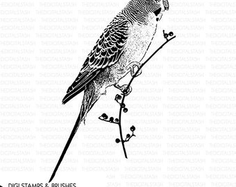 Parakeet Bird Clip Art - Digital Stamp and Brush - INSTANT DOWNLOAD - for Cards, Scrapbooking, Collage, Invites, Journaling, Crafts and More