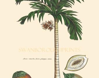 Palm Tree Print. Tropical Coconut Palm Tree Natural History Print. Coastal Beach Bathroom with a Palm Tree Home Decor. Prints of Palm Trees