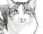 Custom Cat Ink Drawing