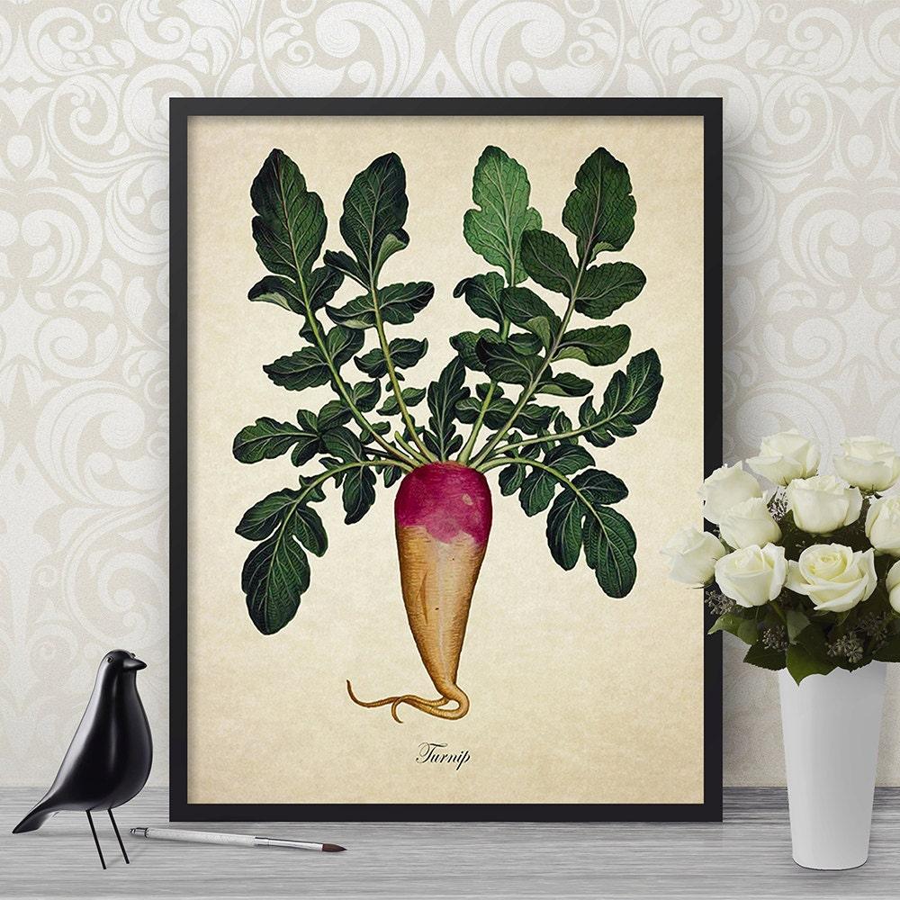 Vintage Botanical Wall Art Print Turnip Giclee Home Decor