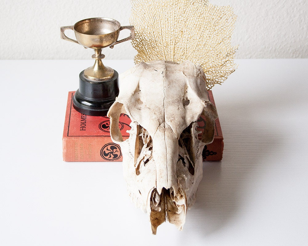 vintage deer head skull or skeleton by sadrosetta on etsy